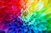Волшебная цветотерапия