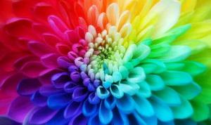 colour_300